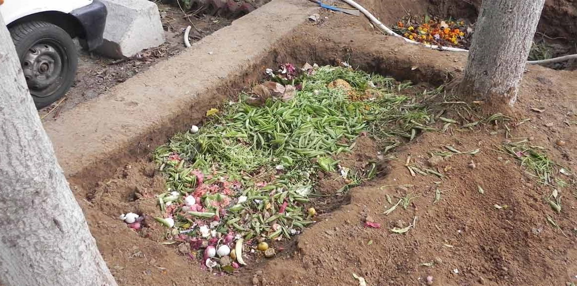 These Dwarka residents know a thing or two about organic gardening