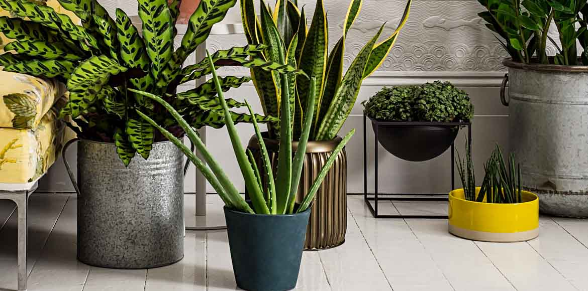 These 5 indoor plants will help you breathe easy
