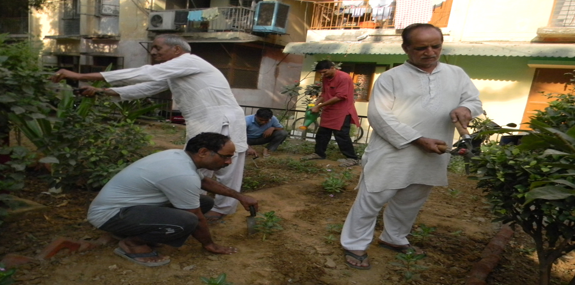 They plant, they prune, they water. What exactly is driving Dwarka residents?