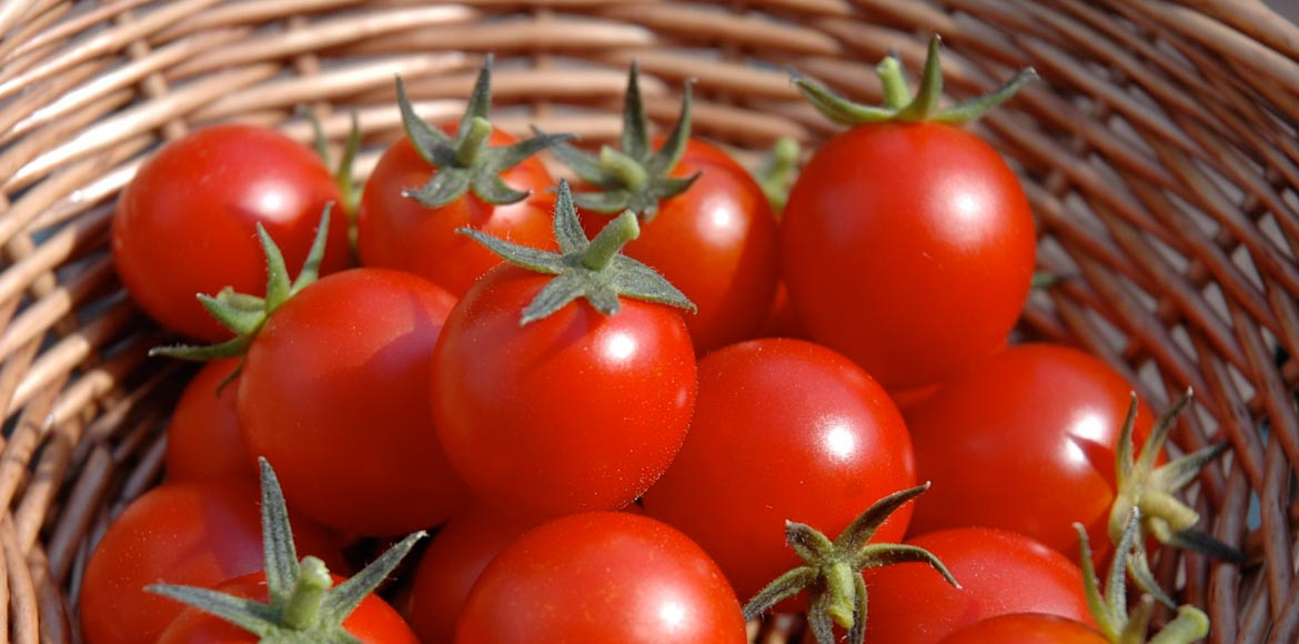 Tomato prices glow red hot!