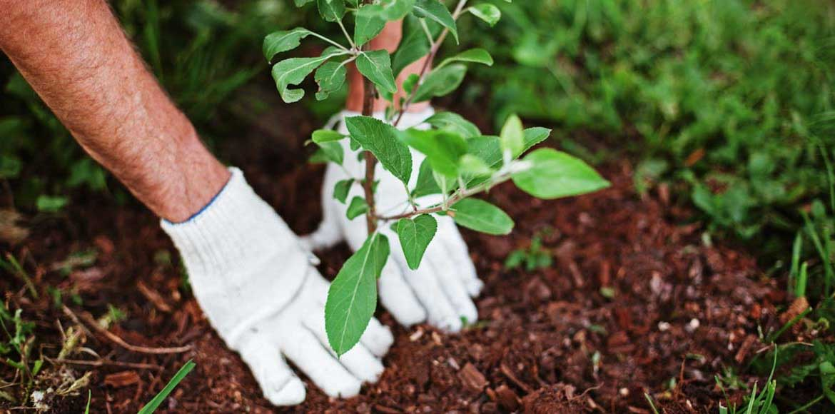 GDA to plant 1,60,000 trees across Ghaziabad