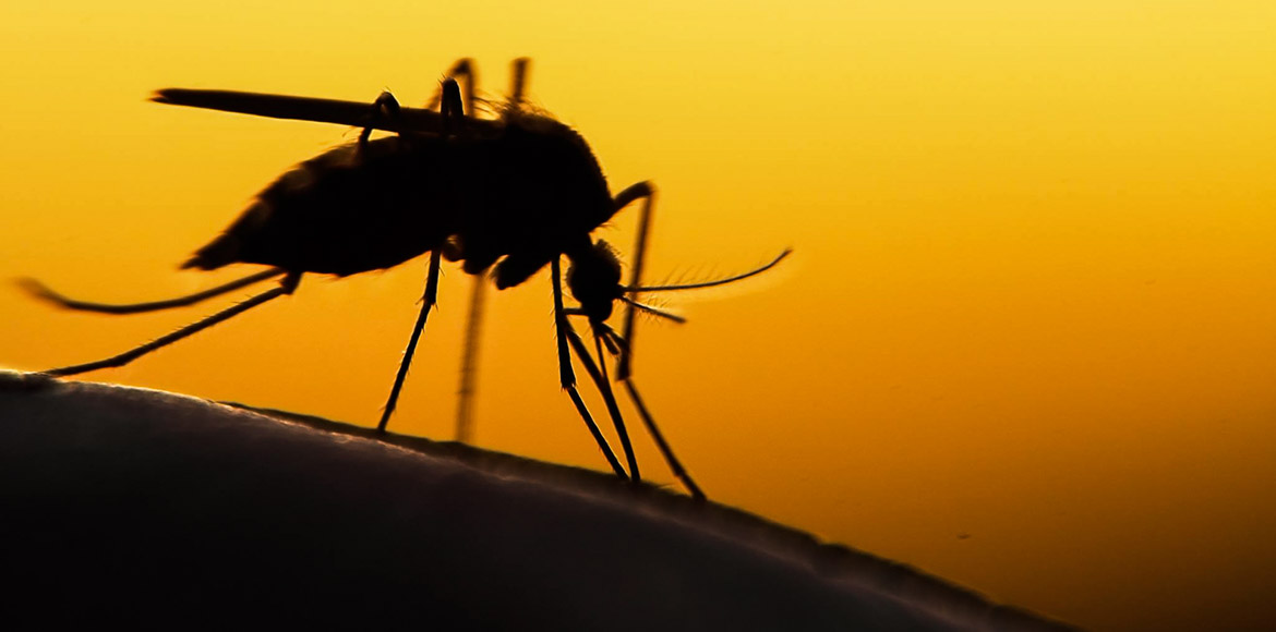 Dengue and chikungunya outbreak in Noida