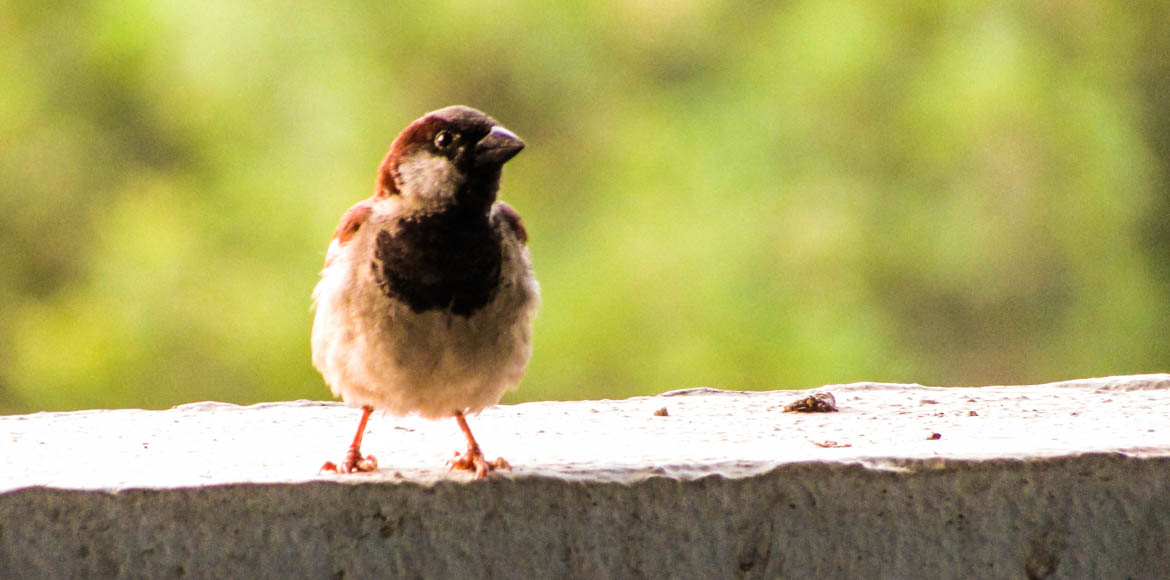 State bird of Delhi, the sparrow, nests in Dwarka Metro stations
