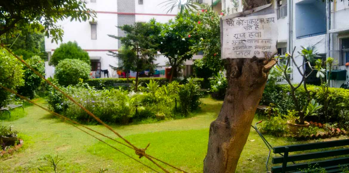 MV 1 Ext: Trees raised by children in United India Apts