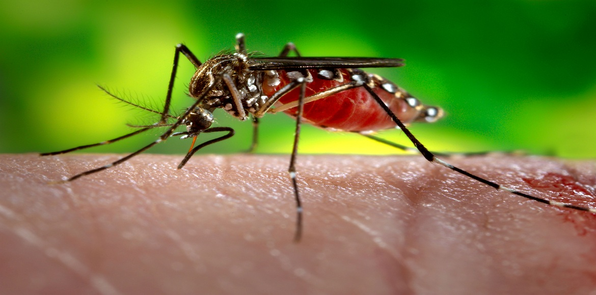 CONRWA communicates its dengue fears to Noida Authority