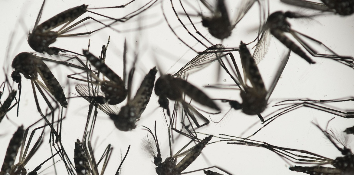 Chikungunya claims its first Dwarka victim