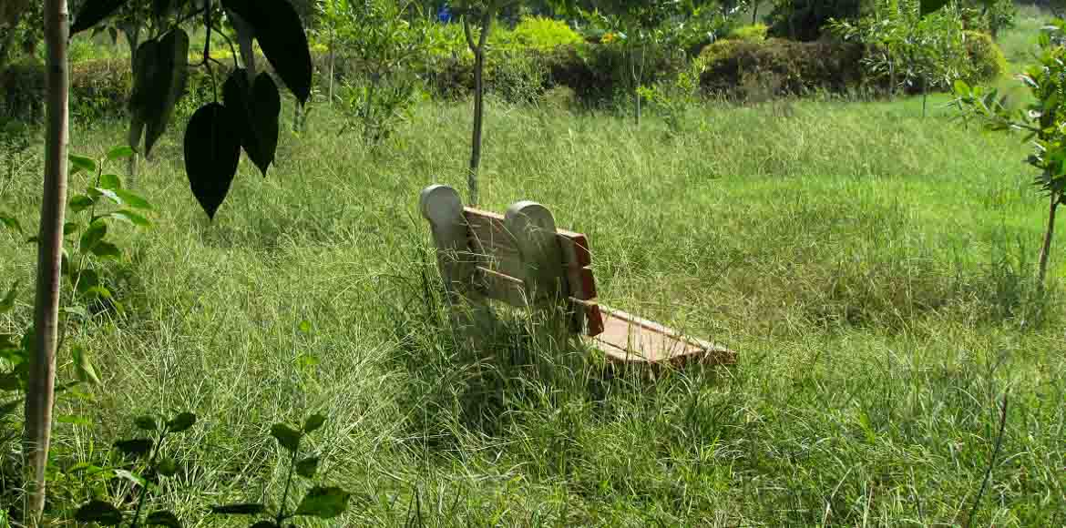 Dwarka parks: Going for the savannah look?