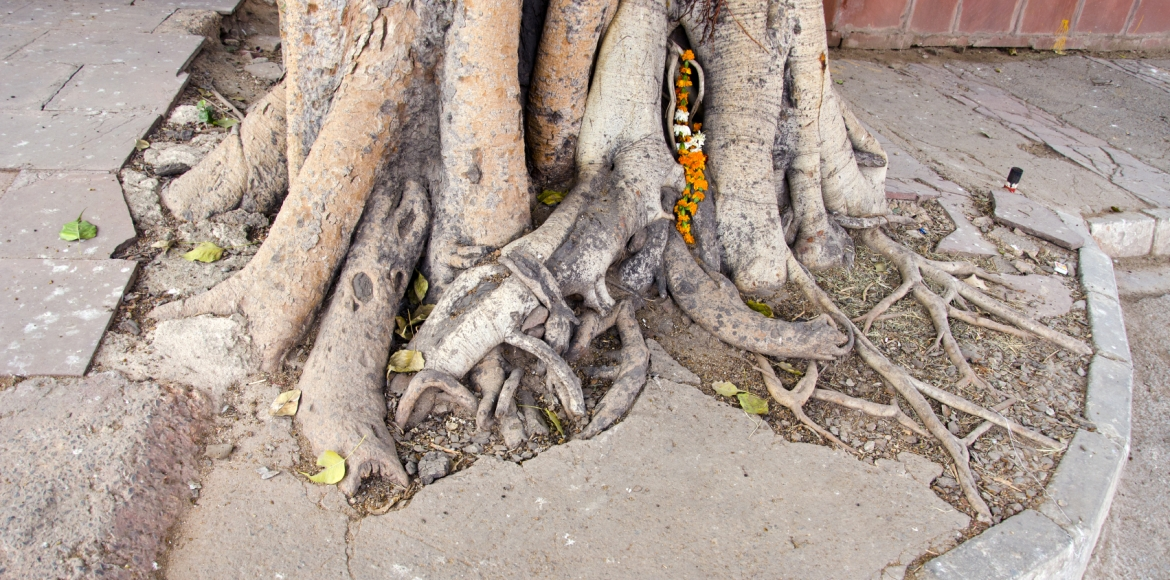 Jalvayu Vihar: Trouble brews over hacked-off trees