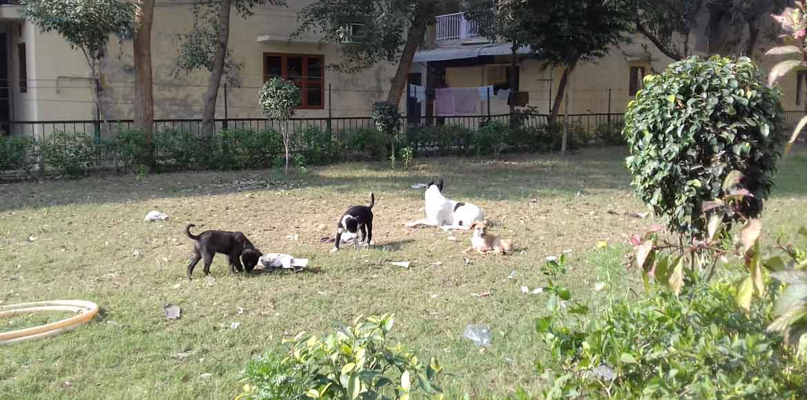 Dwarka, Sec 13 and 14: Too many stray dogs