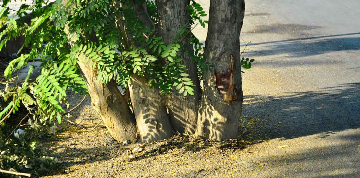 Dwarka: Let the trees breathe!