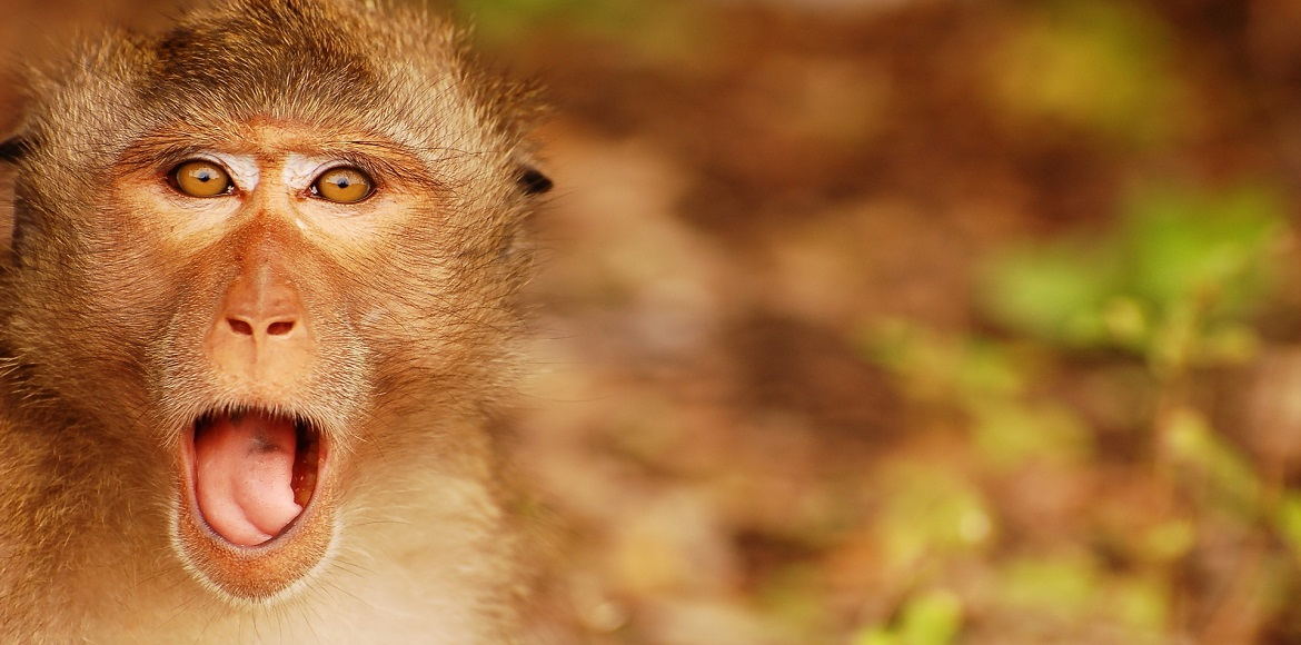 Gurgaon: Did monkey catchers fail because THEY ate