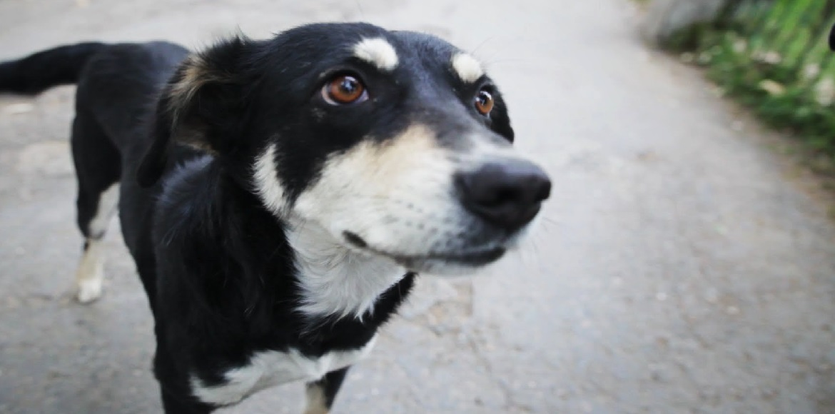 How the murder of a stray dog led to two police of