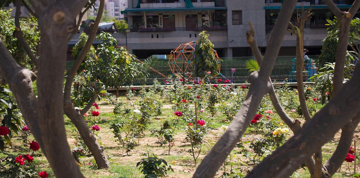 What was once an ignored area is now a popular haunt in Sispal Vihar