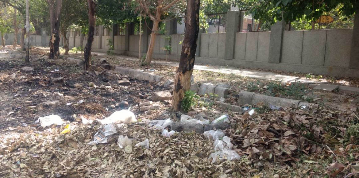 Dwarka: What is harming the greenery in Sector 12?