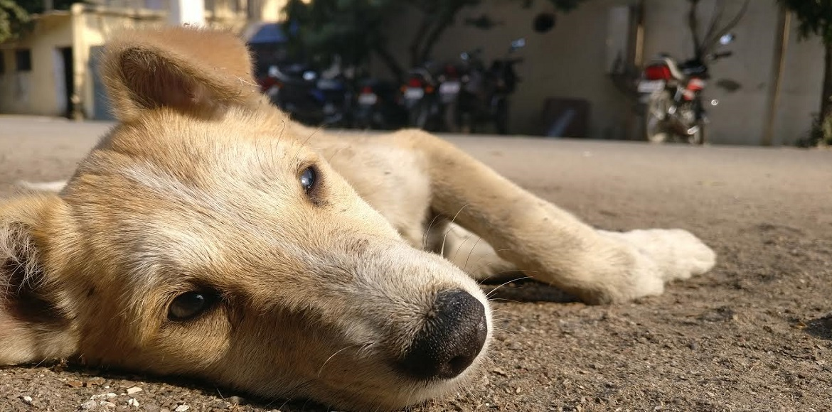 This is unbelievable! Pup becomes a tool of terror at Shipra Srishti