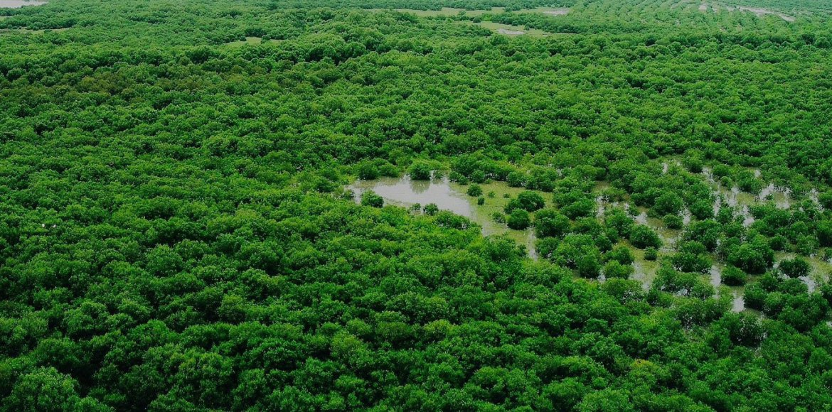 Environmentalists score a win over Haryana governm