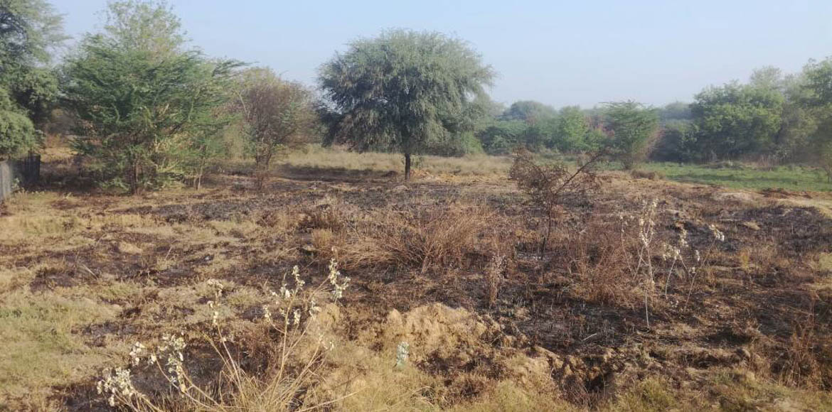 Sec 23, Dwarka: Biodiversity in this woodland at risk