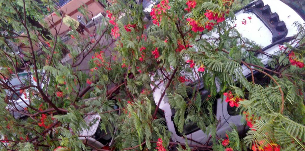 Thurderstorm brings trouble and respite for Noida