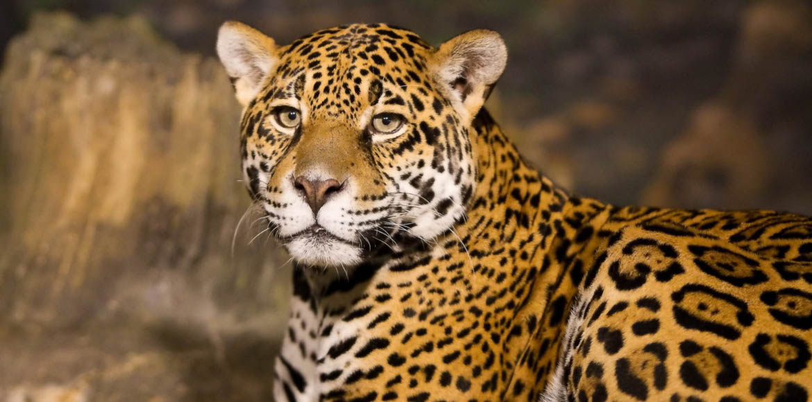 Gurgaon: Leopard sighted in village on Sohna Road?