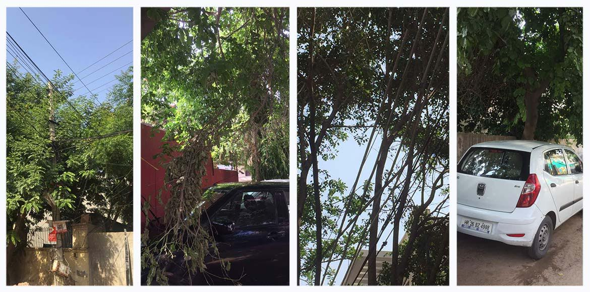Trees conspiring against residents of Sec 56, Gurgaon?