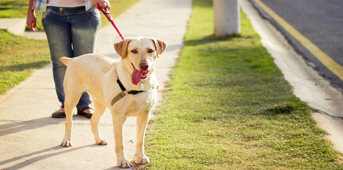 Dog kidnapped for ransom in Gurgaon! Thank god it