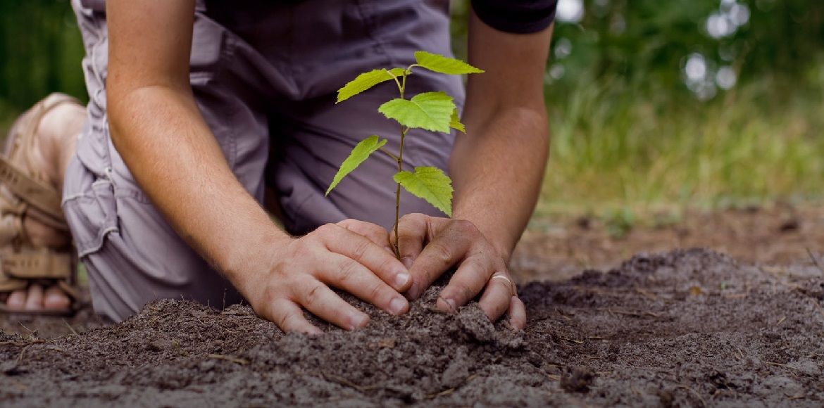 Monsoon showers have the residents planting saplings in society