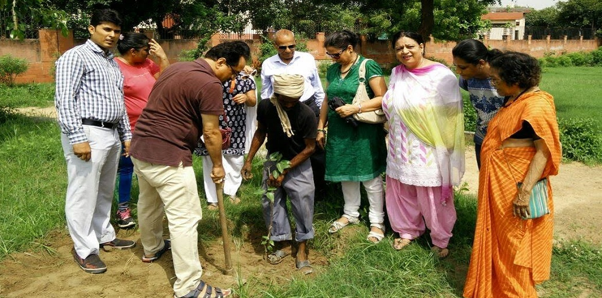 ANHLGT starts tree-planting drives across Dwarka