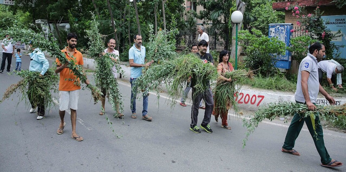 Active Citizen Group takes matters into its hands to take care of city's parks