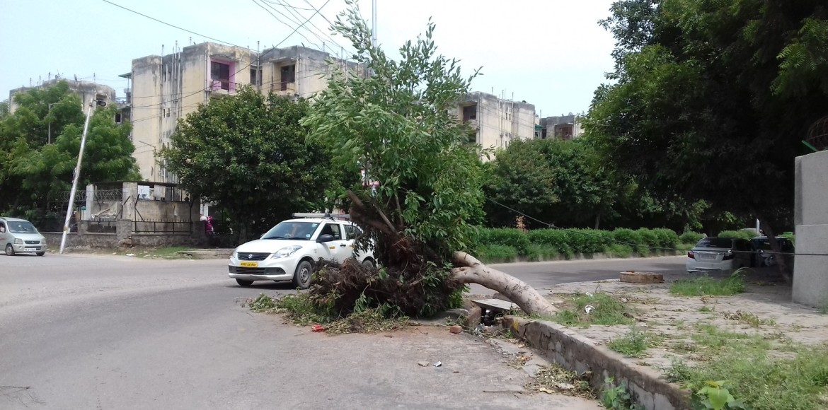 Dwarka: Uprooted trees pose danger to commuters