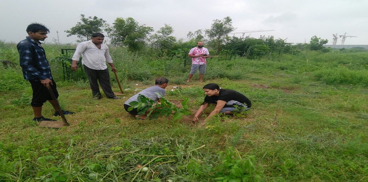Saplings are multiplying at Dwarka