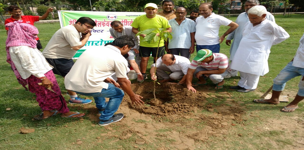 Tree planting drive in Sector 51, Noida