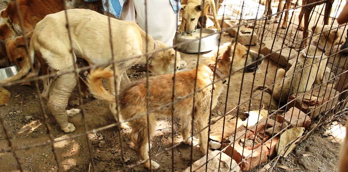 Noida, will you let SPCA down its shutters?