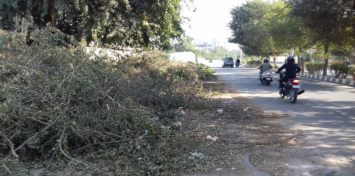 Horticulture waste or solid waste… Which is the bigger civic issue in Dwarka?