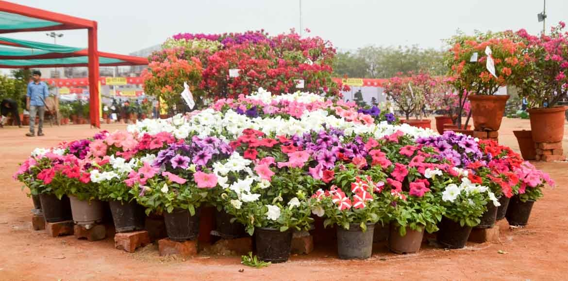 If you are near Noida Sector 21 A, step into the flower show at Ramleela Grounds
