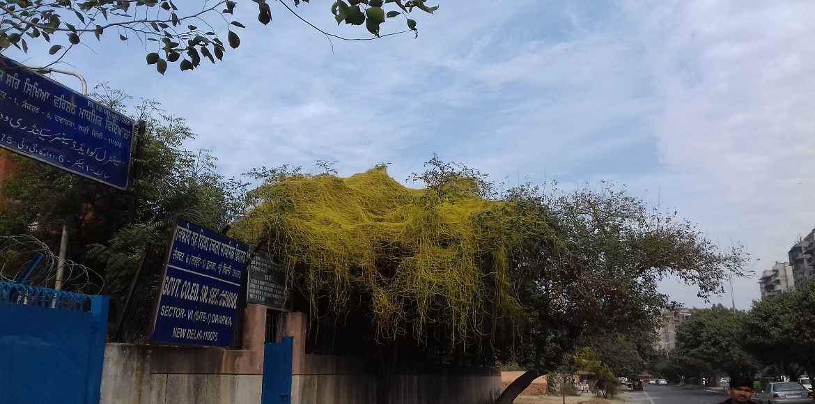 Parasites, termites and earthworms leave a trail of dead trees in Dwarka
