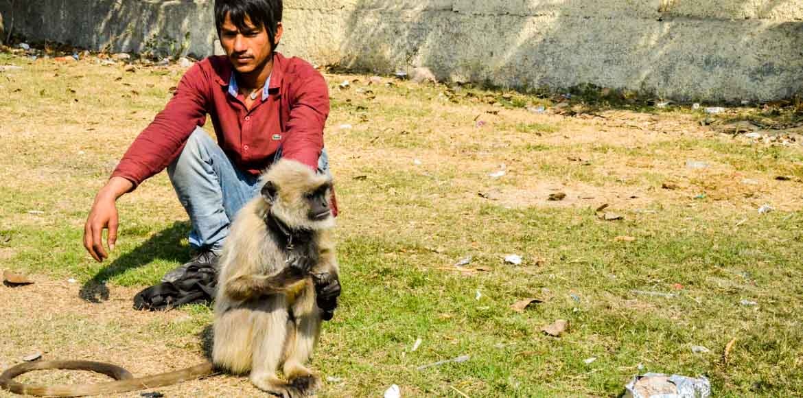 One monkey captured in Sec 62, Noida. But is it the aggressive one?
