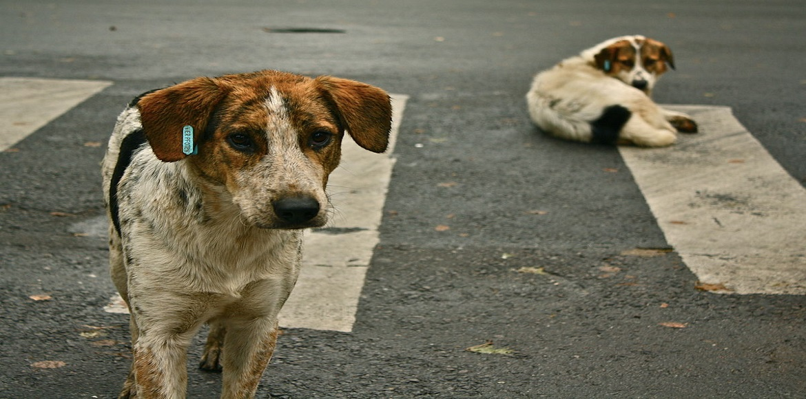 SDMC has a plan to control the stray dog populatio