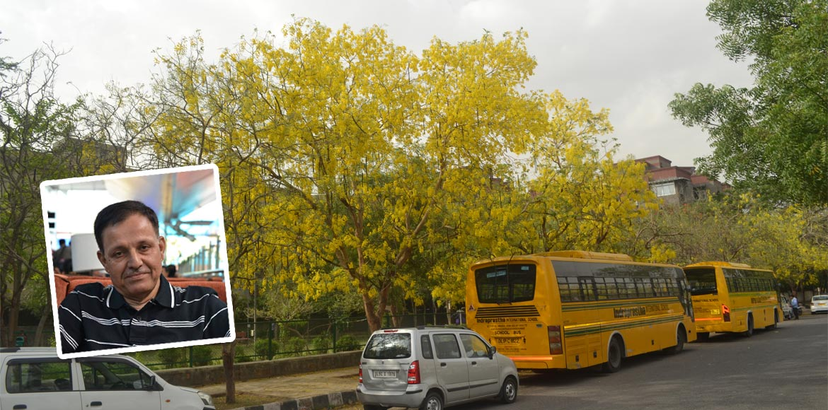 RESIDENT SPEAK: Bloom of Amaltas flowers enhances beauty of Dwarka
