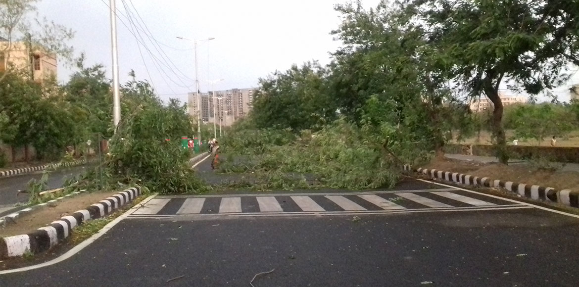 Trees uprooted, street lights damaged as thunderstorm wreaks havoc in Dwarka