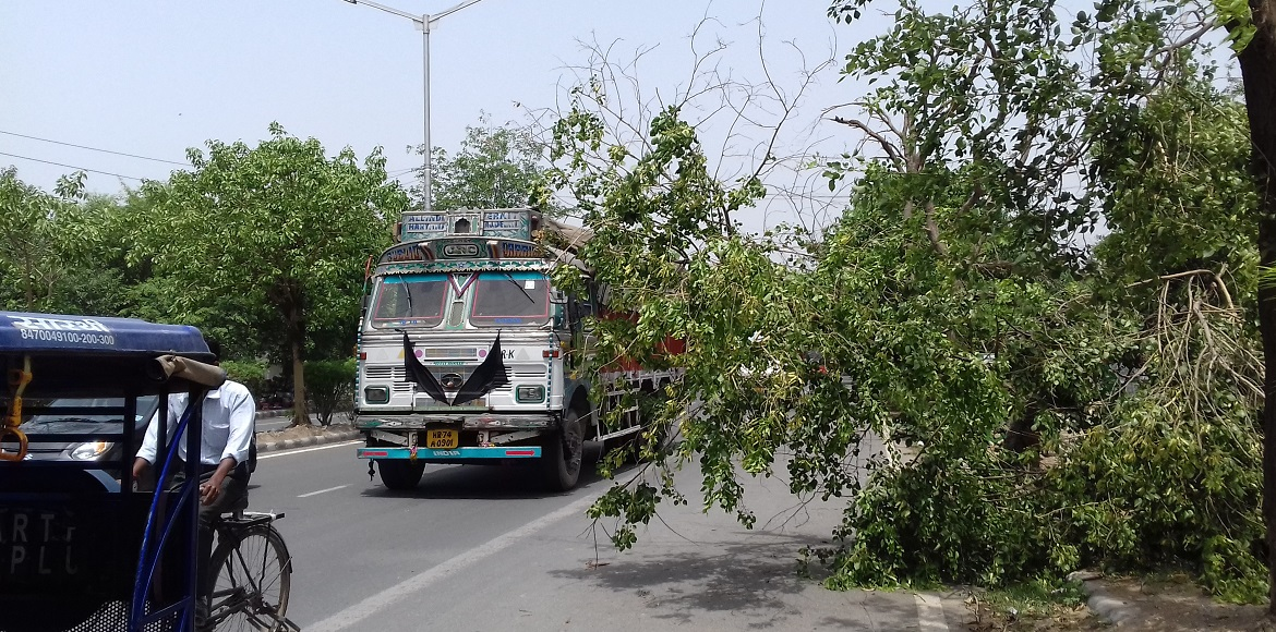 Dwarka: Fallen trees affect commuters as authorities yet to pick up after storm