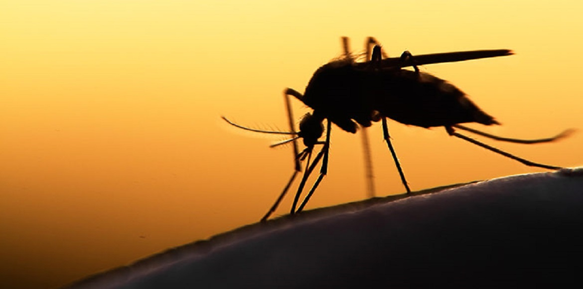 Delhi: Health dept to designate nodal officers to monitor vector-borne diseases