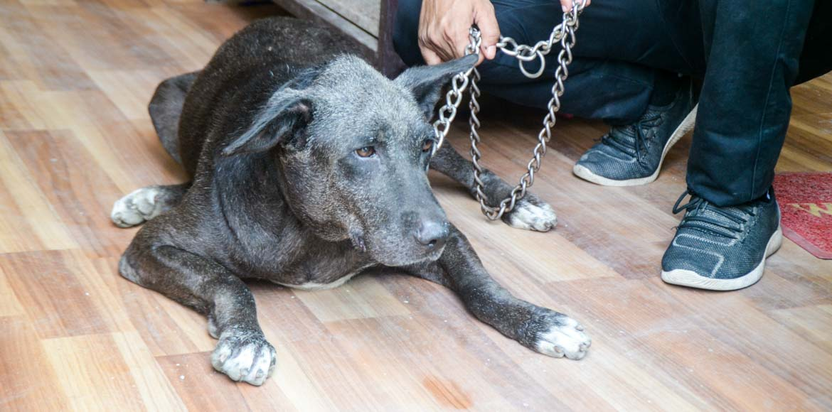 Burari suicides: Pet dog to spend rest of life with new caretaker in Noida