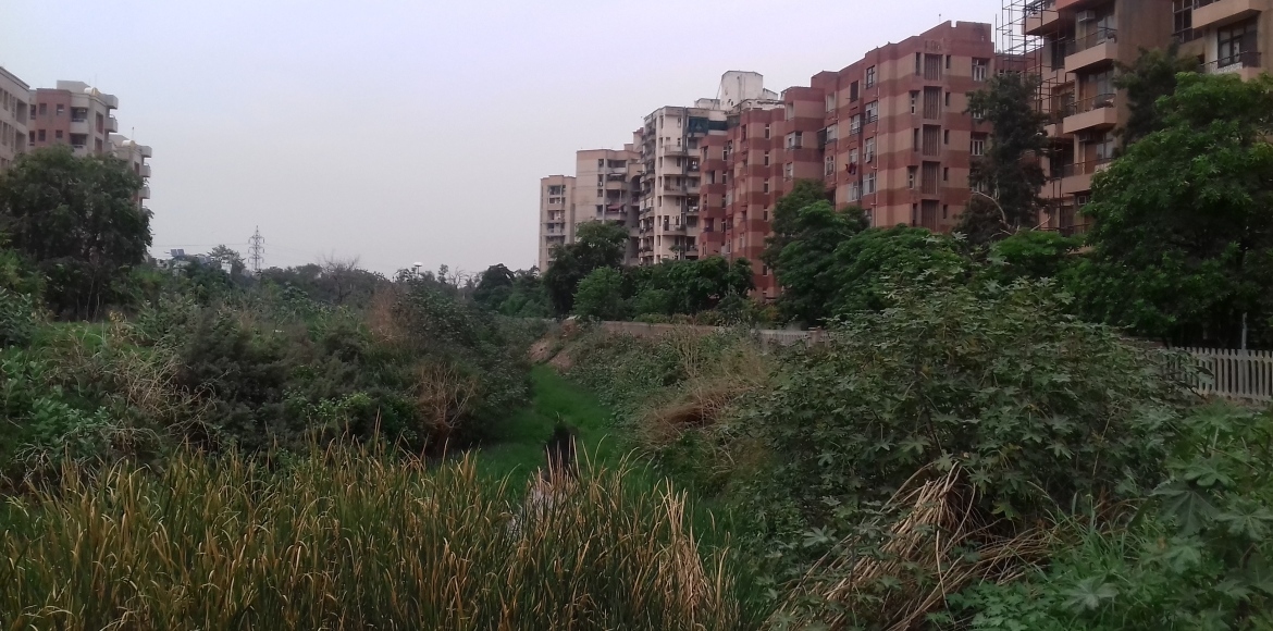 What's eating these residents of Dwarka...