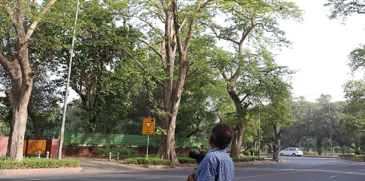 Delhi: Environment ministry gives green signal for cutting of 11k trees