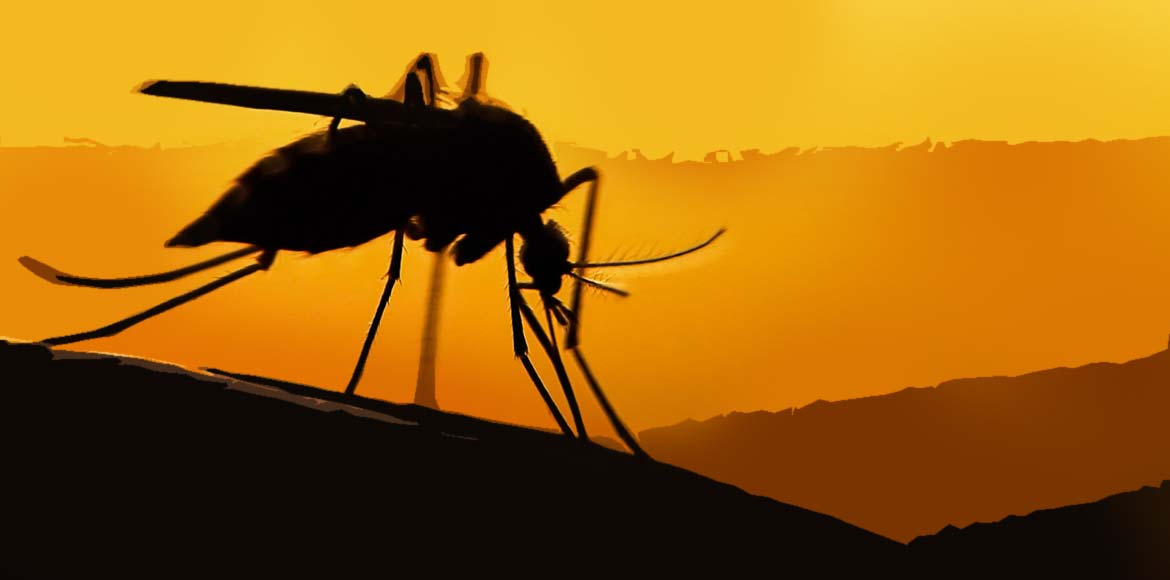 One more dengue case reported in Gurgaon
