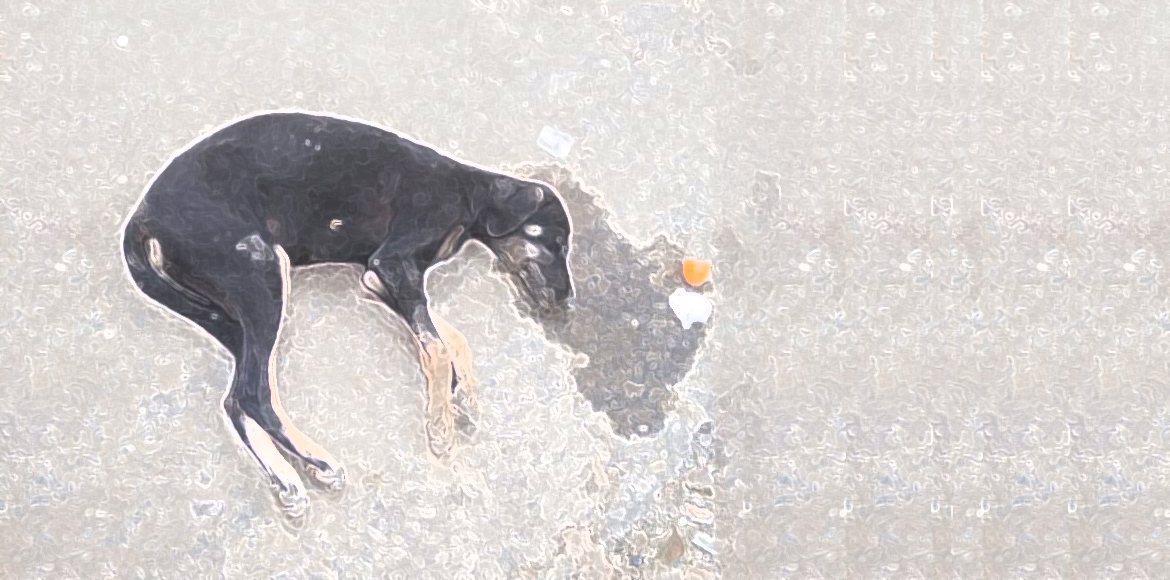 Now, four more puppies poisoned in Dwarka; one survivor in critical condition