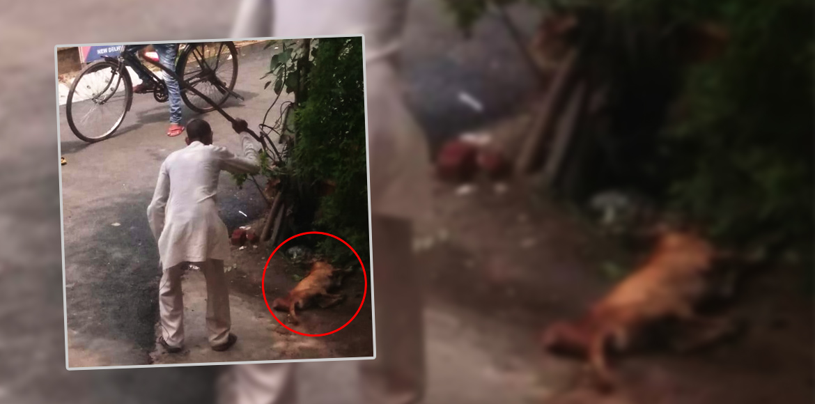 The violent killings of strays in Dwarka could poi