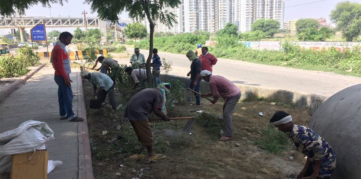 Noida Authority begins planting saplings and grass in areas with high-rises