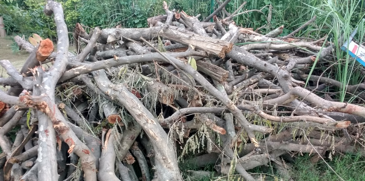 Forest department books GDA for pruning trees in 'city forest area'