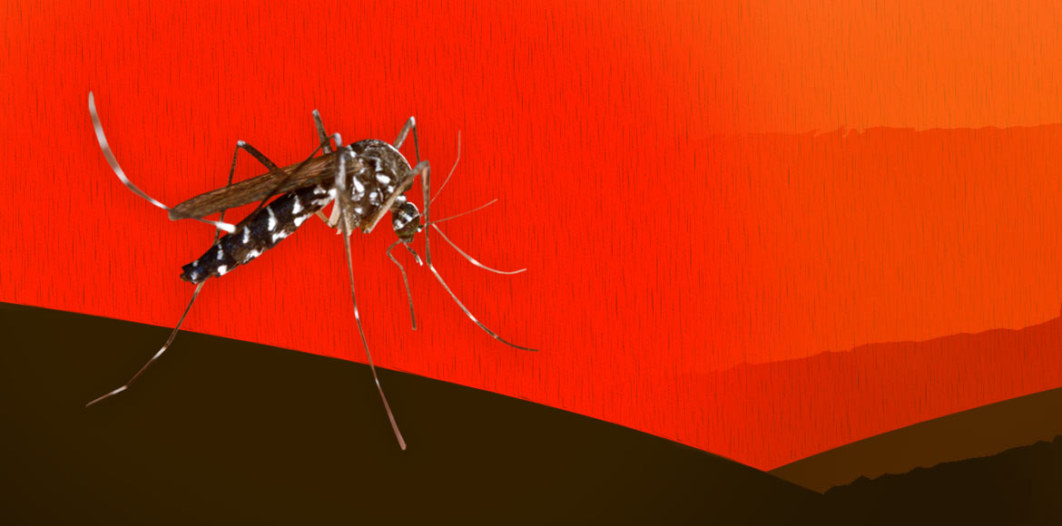 Three dengue cases confirmed in Noida